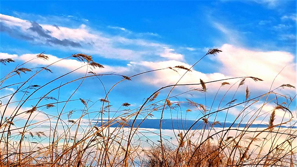Clark County Wetlands 2 by Angelica777
