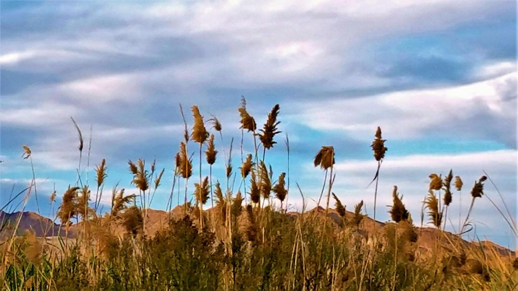 Clark County Wetlands 3 by Angelica777