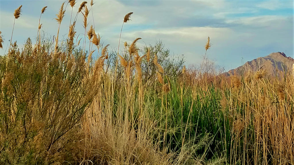 Clark County Wetlands 4 by Angelica777