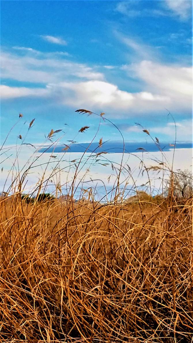 Clark County Wetlands 5 by Angelica777