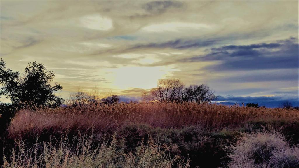 Clark County Wetlands 6 by Angelica777