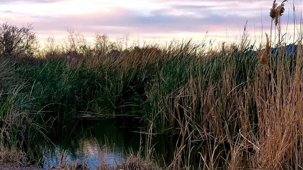 Clark County Wetlands 11 by Angelica777