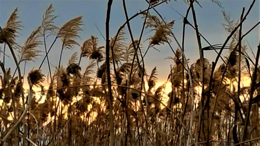 Clark County Wetlands 13 by Angelica777