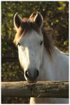 ''A horse''