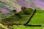 Glittering Hills