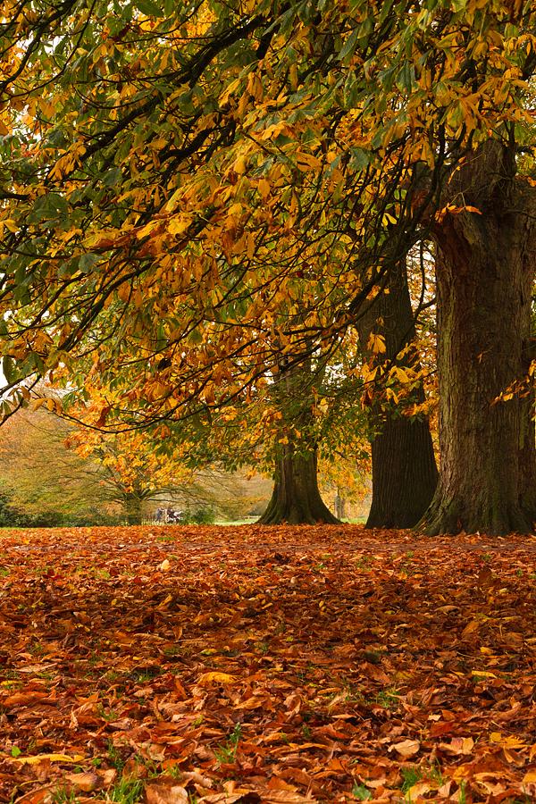 Autumn  at Westonburt by parallel-pam