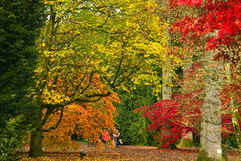 Autumn Splash by parallel-pam