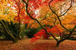 Veins of Autumn