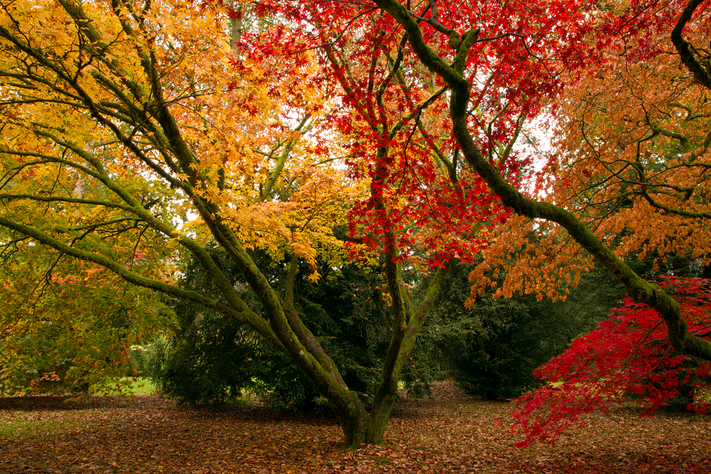 Autumn Canopy by parallel-pam