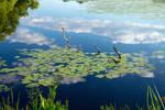 Swedish Monet