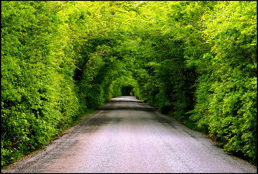 Irish Avenue by parallel-pam
