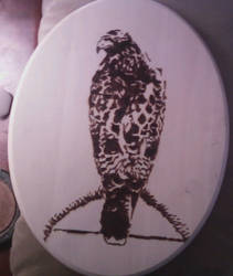Pyrography - Sammy the Hawk by naaxha