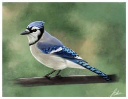 Blue Jay by photografever
