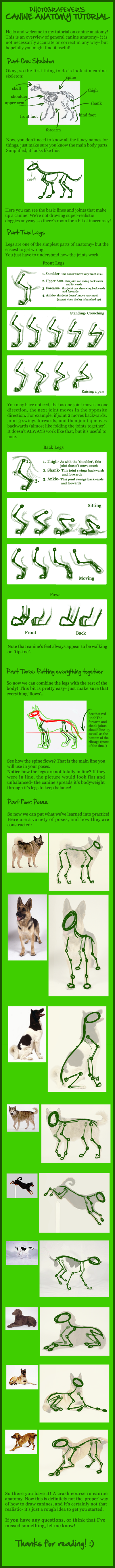 GIANT CANINE ANATOMY TUTORIAL by photografever