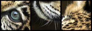 Jaguar Painting Close Ups