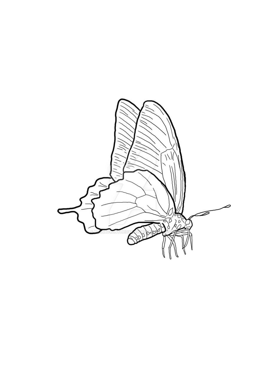 butterfly outline by rainbowinthedark1 on deviantart