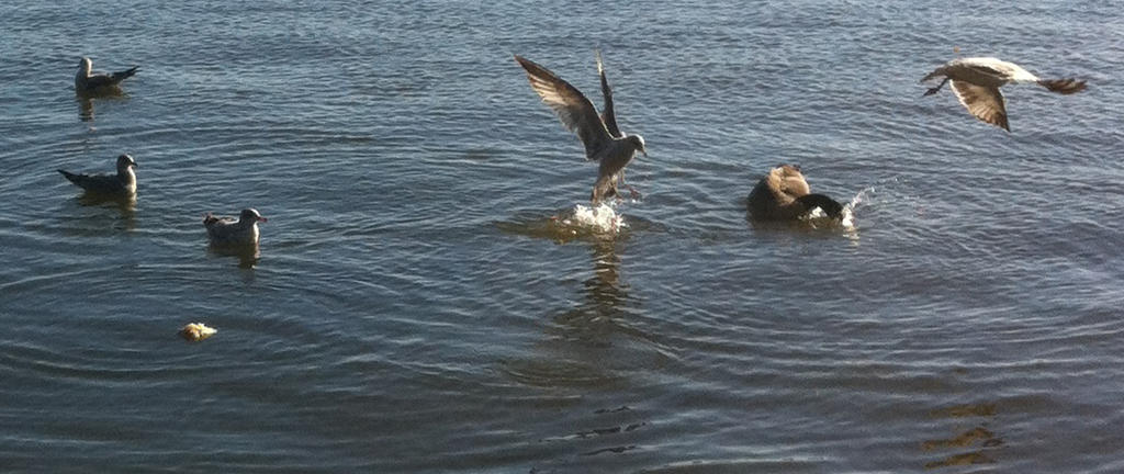 Bird At the Water by Q99