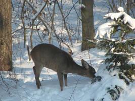 xmas roe deer 5 by Cyklopi