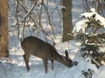 xmas roe deer 6 by Cyklopi