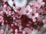 Flowers of spring by Cyklopi