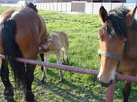 Horse family by Cyklopi