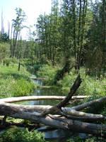 Mirkwood forest by Cyklopi