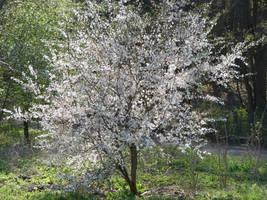 Beautiful spring by Cyklopi