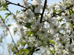 Sunny April by Cyklopi