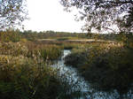 Fields of reeds by Cyklopi