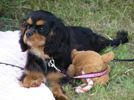Cavalier puppy by Cyklopi