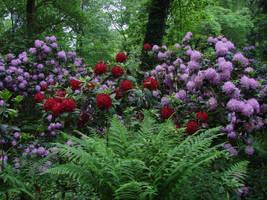 Enchanted garden by Cyklopi