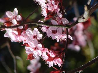 Flowering day