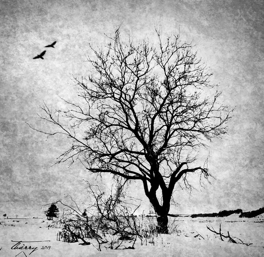 Tree and Ravens by Grimlord666