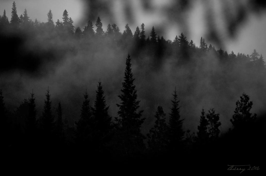Evergreens by Grimlord666