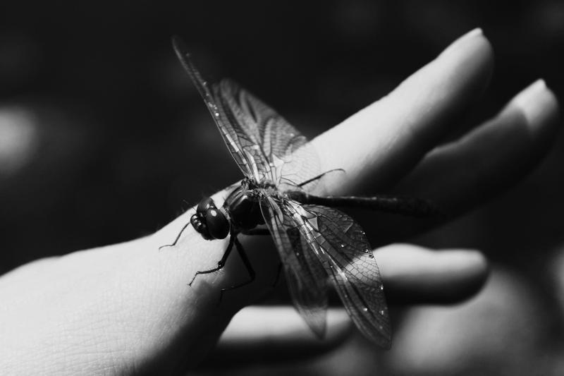 Wings by MacKen77