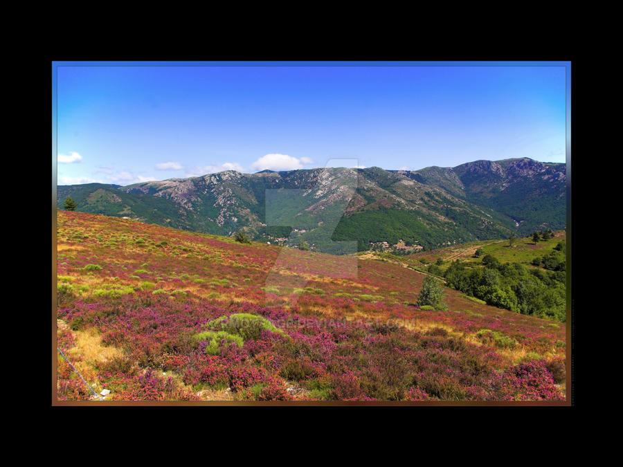 Erica's field by rmotfage