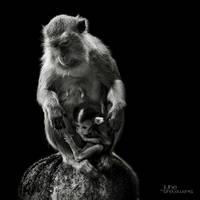Cinta Monyet by juhe