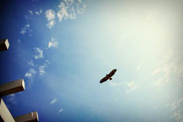Hawk SNAP by perseverancefilm