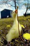 My Ducky Duck Duck