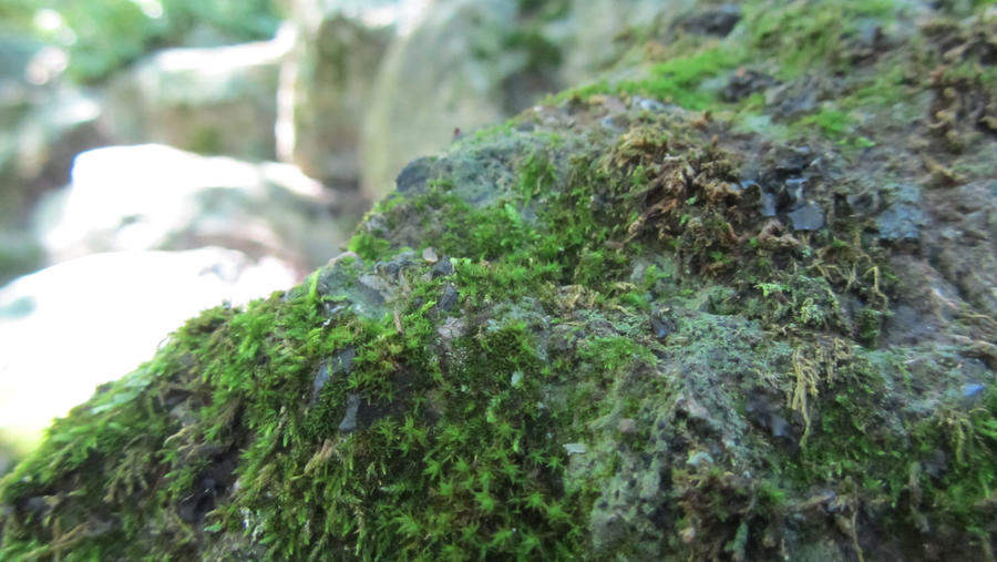 .Mossy Green. by decayedroses