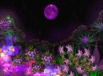 Fleurs de la valle de la Lune