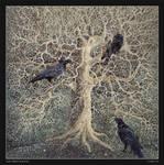 The Three Ravens