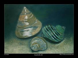 Seashells III