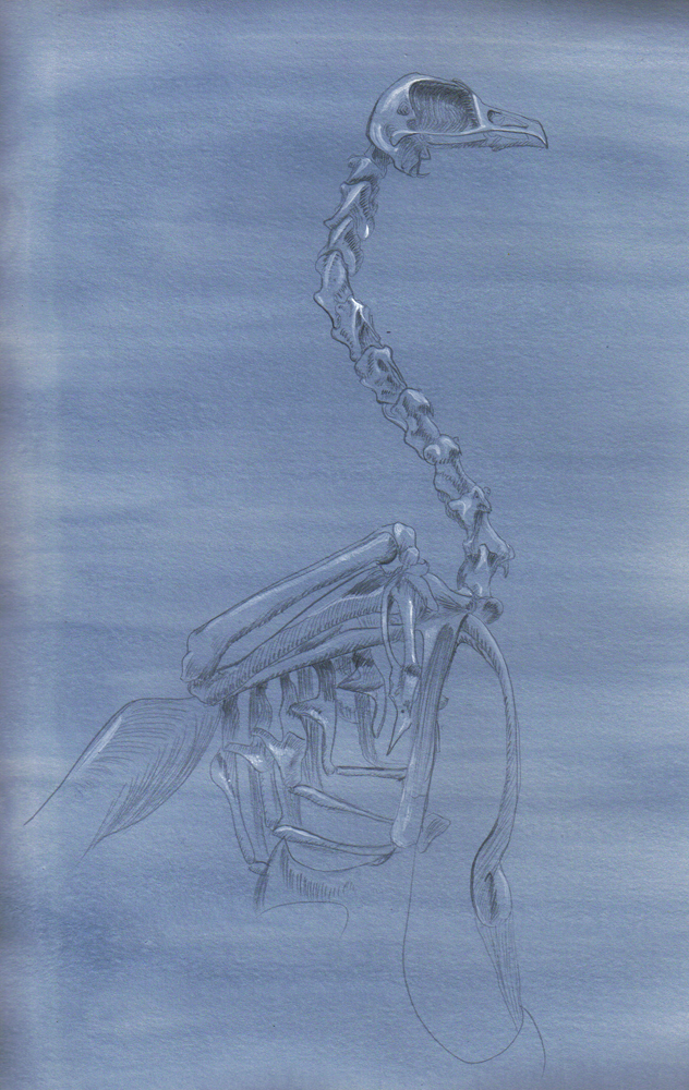 Bird Skeleton Silverpoint by Icetigris