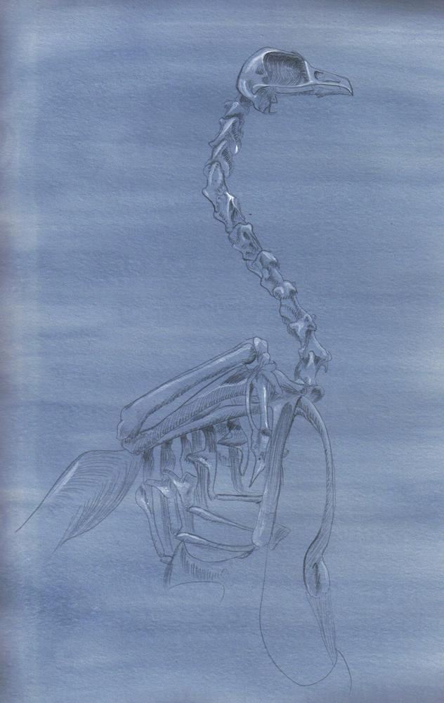 Bird Skeleton Silverpoint by Icetigris
