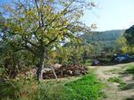 From Armutlu peninsula route 18
