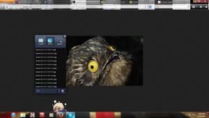 Bird?