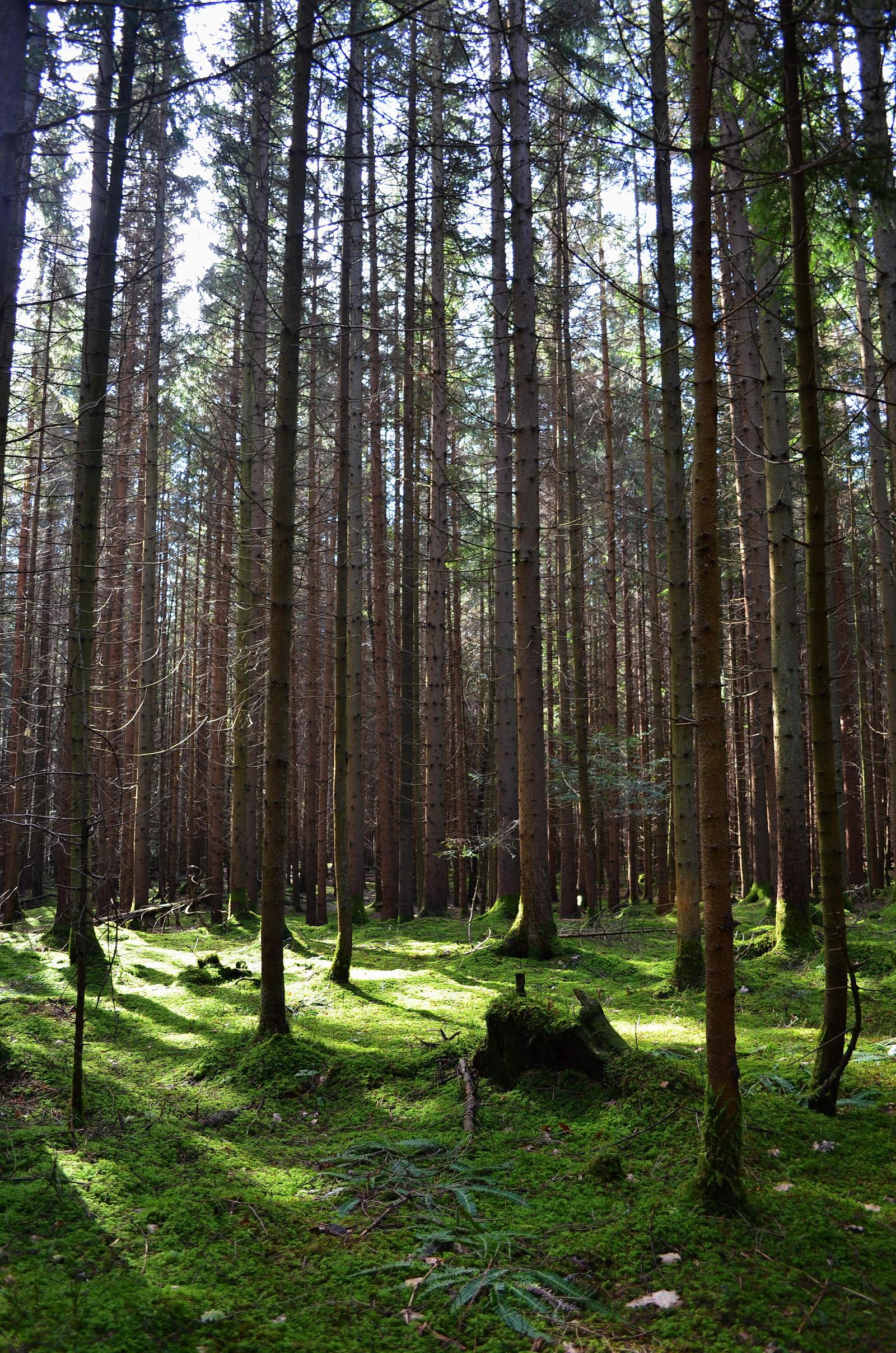 Forest Landscape Images - Reverse Search
