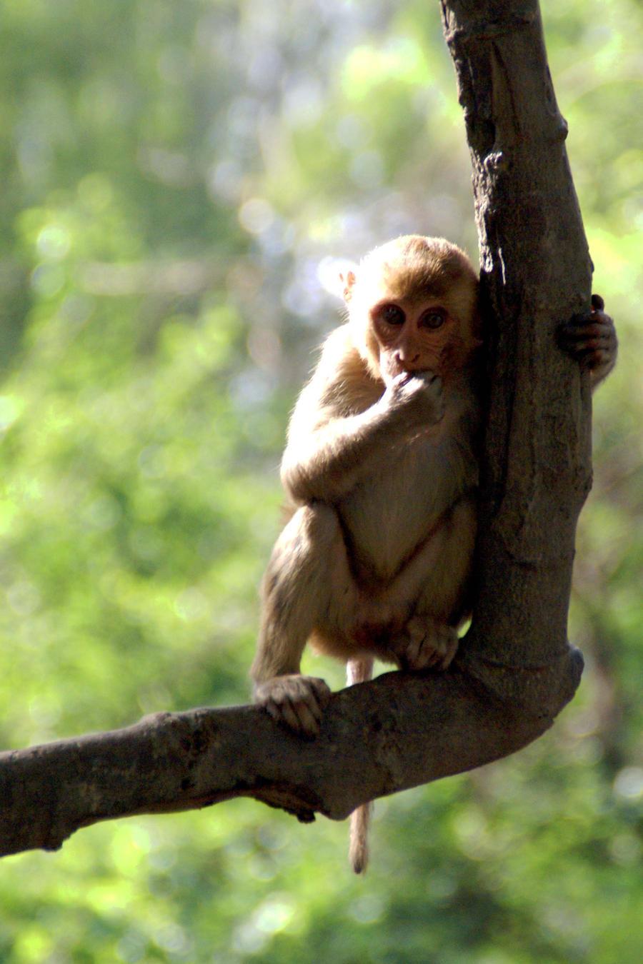 Curious little monkey by Art-by-Jilani