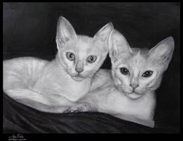 Tail of two kitties by Art-by-Jilani